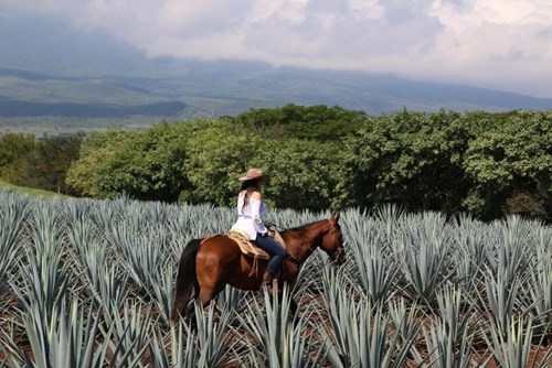 Agave Tequila Jalisco