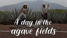 A day in the agave fields a unique experience 2